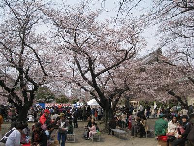 おひがし桜まつりs
