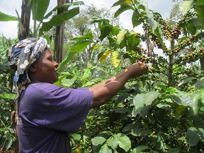224コーヒーとり村の女性10s