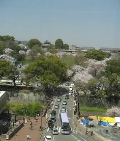 桜と奥にみえるのが熊本城