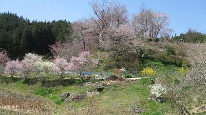 IMG_5599里山の春